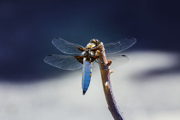 Dragonfly sits on branch.