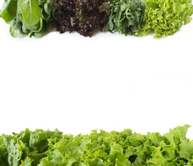 Arugula, spinach, red and green lettuce on a white background. Fresh lettuce at border of image with copy space for text. Top view.