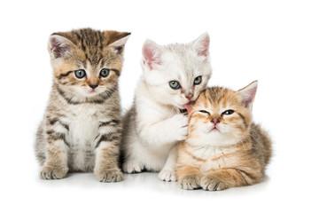 Foto op Canvas Kat Drei Kätzchen