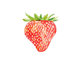 fresh strawberry illustration. Hand drawn watercolor on white background.