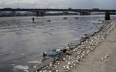 Dead fish lie on the shore of Guanabara Bay in Rio de Janeiro