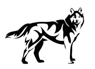 standing husky dog side view black and white vector design