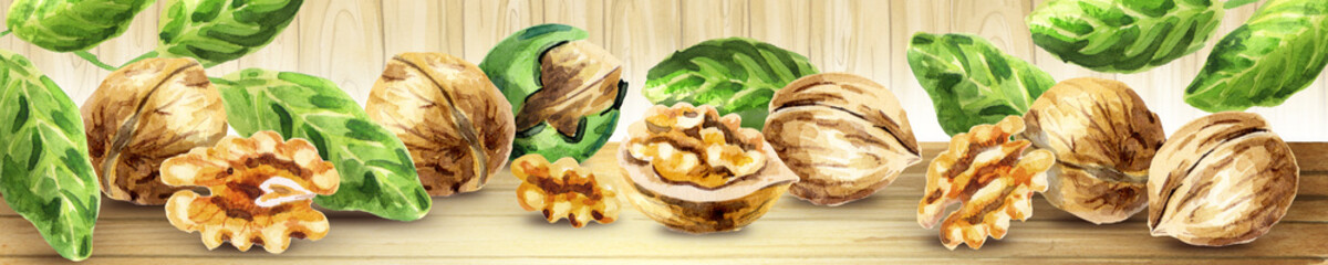 Panoramic image of walnut. Can be used for kitchen skinali. Watercolor