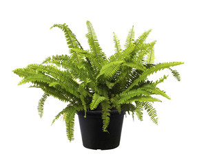 Fern, Green leaf tree plant fresh nature