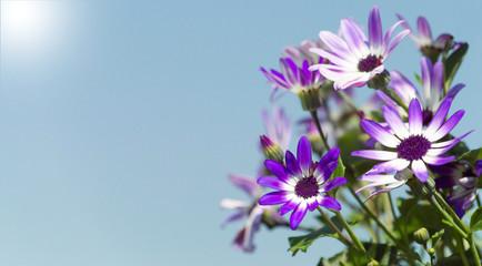 Frühlingsblumen im strahlenden Sonnenschein