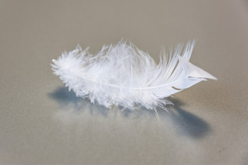 Soft and sensitive feather