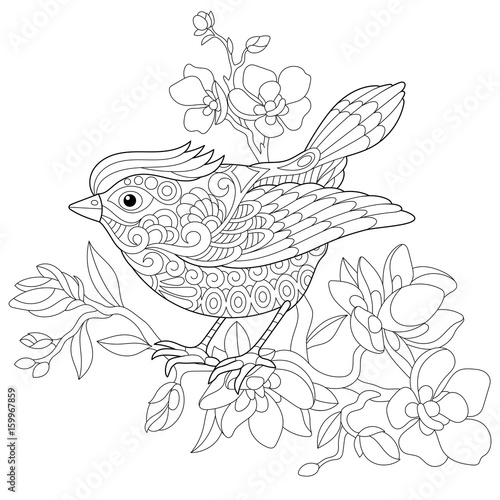 Coloring Book Page Of Sparrow Bird Sitting On Apple Blossoming Tree Branch Freehand Sketch Drawing