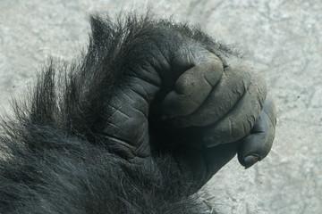 Gorilla Hand Closeup