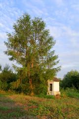 chapel under tree