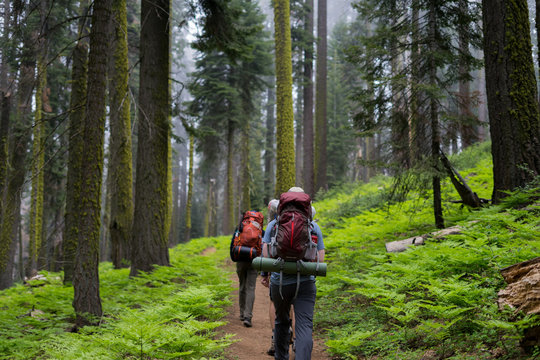 A group of backpackers hike through a densely grown forest