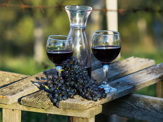 Vine and grape on the table,colored photo