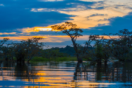 Sunset silhouetting a flooded jungle in Laguna Grande, in the Cuyabeno Wildlife Reserve, Amazon Basin, Ecuador