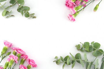 Baby eucalyptus leaves and pink carnation flowers on white background with copy space