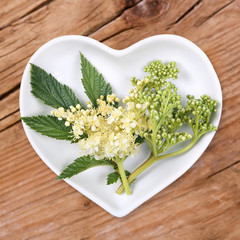 Mädesüß, Homöopathie und Kochen mit Heilkräutern