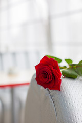 Red rose on a chair