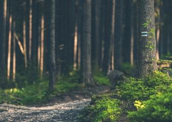 Fototapete - Deep Forest Trailhead