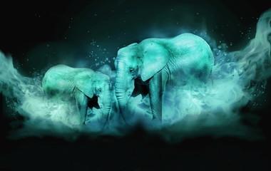 Two elephants in blue fog