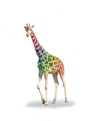 Crazy colorful giraffe