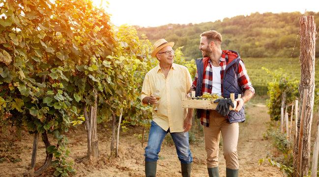 Family in vineyard celebrating harvesting grapes.