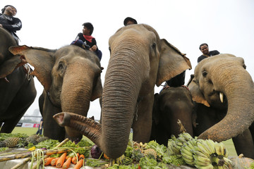 Elephants have a fruit buffet during the opening ceremony of the annual charity King's Cup Elephant Polo Tournament at a riverside resort in Bangkok