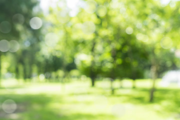 blur natural and light background in the park.