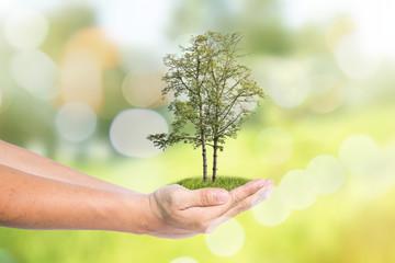 Sustainable Green Ideas
