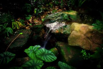 magischer regenwald