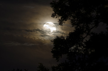 Full Moon with Silhouetted Tree