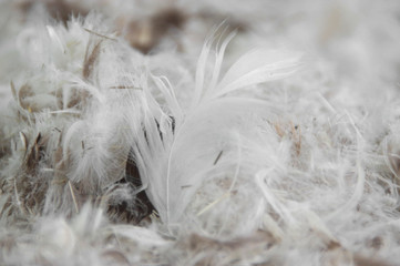 Pile of feathers