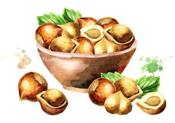 Bowl of hazelnuts. Watercolor illustration