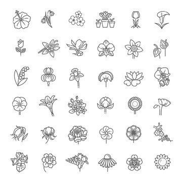 Flower Icon Set - Vector Illustration