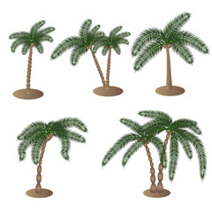 Different palm elements on an isolated background. Vector ilustration