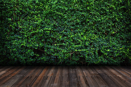 Green leaves wall with wood floor.