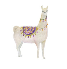 Watercolor painting white llama
