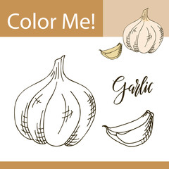 Education coloring page with vegetable. Hand drawn vector illustration of garlic
