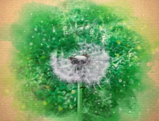 Watercolor pattern of a dandelion