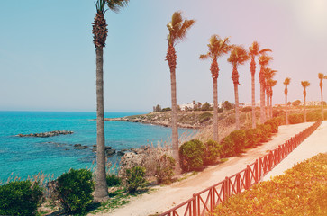 The road along the rocky sea coast with palm trees, shrub and grasses on a Sunny day. The horizontal frame.