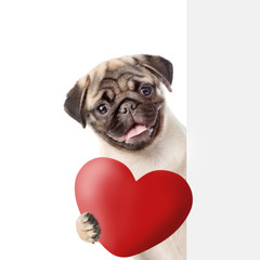 becff456f4a Cute puppy with a red heart behind white banner. isolated on white  background