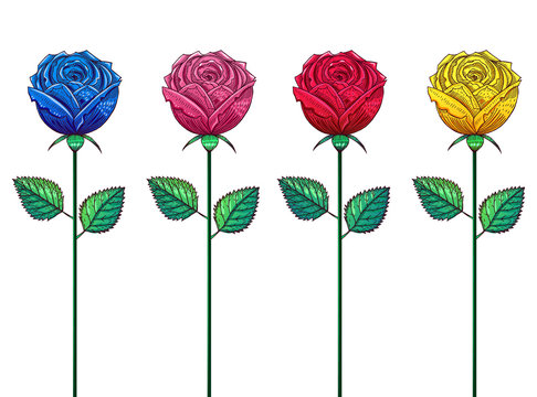 Multicolored roses on long stems, drawing