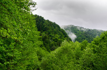 Summer mountain forest with foliar trees in Gaucasus, Mezmay