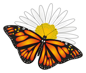 Butterfly, monarch, wings, flying, insect, nature, cartoon, black, orange, white, Flower, chamomile,