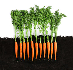 Carrots and soil on white background