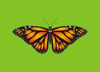 Butterfly, monarch, wings, flying, insect, nature, cartoon, black, orange, white, green, one