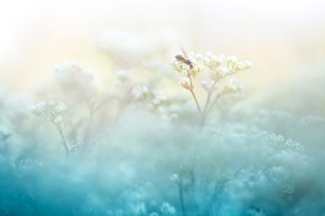 Fototapete - A gentle natural background in pastel colors with a soft focus of blue and beige shades. A flowering plant in the spring with blurry soft outlines. Ant on branch of the plant is macro.