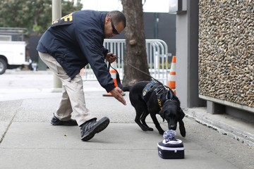 K-9 units of the U.S. Bureau of Alcohol, Tobacco, Firearms and Explosives (ATF) inspect vehicles for explosives outside Super Bowl City in San Francisco, California