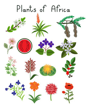 Plants of Africa