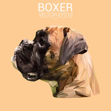 Boxer Dog animal low poly design. Triangle vector illustration.