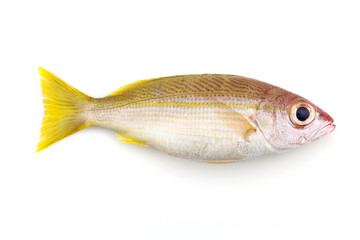 Bigeye Snapper fish isolated on white background.
