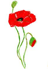 Red watercolor poppy flower