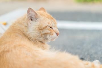 眼を細める猫